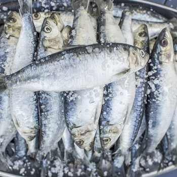 World famous Sardines